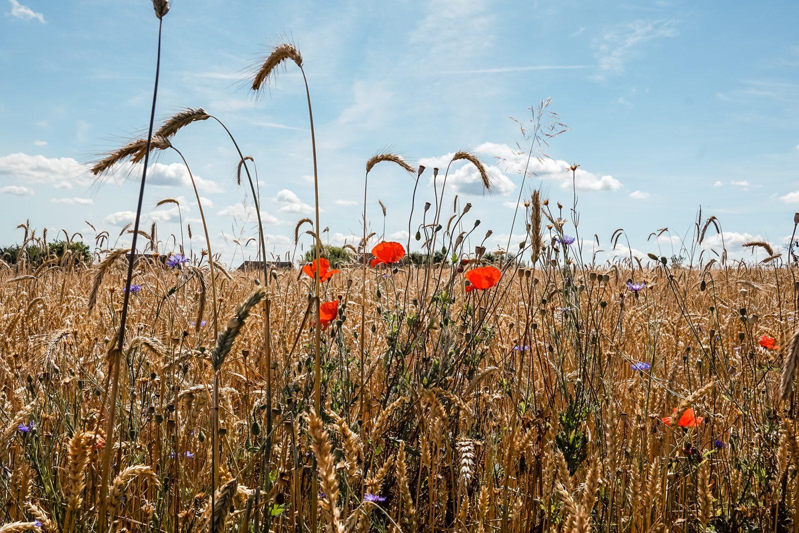 DIE5 | Fünf Antworten auf die Frage: Warum Brandenburg?