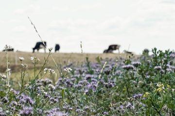 Hemme Milch Uckermark – ein Blick hinter die Ku(h)lissen (UM)