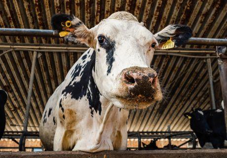 Hemme Milch Uckermark – ein Blick hinter die Ku(h)lissen