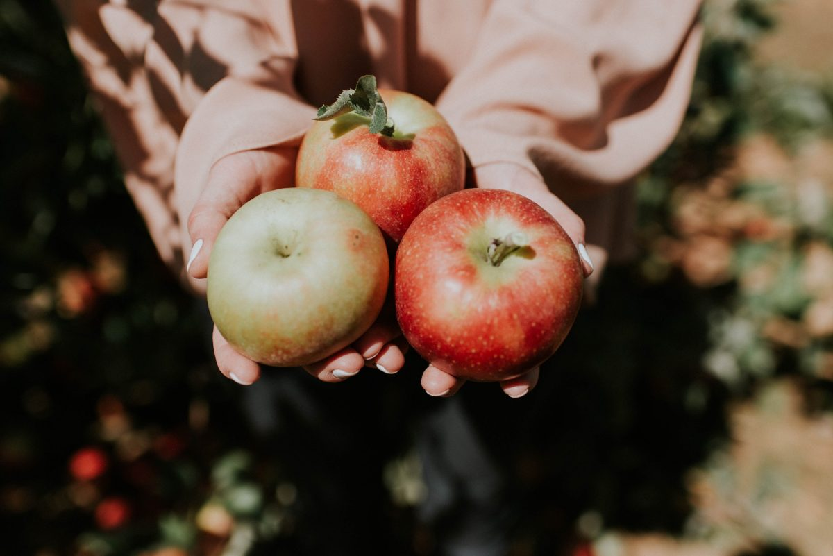 Drei Äpfel in der Hand einer Frau bei herbstlicher Stimmung